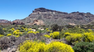 teide-nationalpark-7